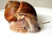 Focus on the eye snail — Stock Photo