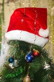 Kırmızı şapka noel ağacı üzerinde — Stok fotoğraf