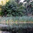 Pond with reeds and trees — Stock Photo #29854735