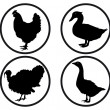 Round buttons with silhouettes of poultry — Stock Vector #48866379
