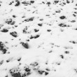 Land under snow — Stock Photo #39720703