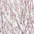 Snowcovered branch — Stock Photo #39722101