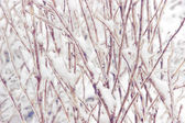Snowcovered branch — Stock Photo
