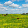 Idyllic meadow with dandelion and cows - Stock Photo