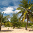 Palm trees on white sand beach — ストック写真