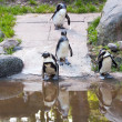 Penguins in the zoo - Stock Photo