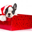 Royalty-Free Stock Photo: Adorable puppy in Christmas present box