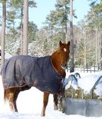 Winter horse — Stockfoto