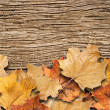 Autumn background. Dry leaves on the old rotten board — Stock Photo