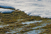Melting snow revealing ground underneath — Stock Photo
