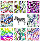 Colorful abstract illustration set of zebra pattern — Stock Vector