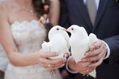 Dos doves.wedding blanco — Foto de Stock