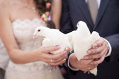 Two white doves.Wedding — Stock Photo