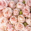 Bright pink roses background — Stock Photo #41192265