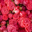 Beautiful red roses background — Stock Photo