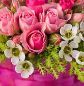 Beautiful pink rose flowers — Stock Photo