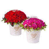 Bunch pink roses and red in bucket. Isolated on white background — Stock Photo