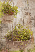 Vintage floral print — Stock Photo