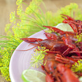 Traditional swedish crayfish holiday meal — Stock Photo