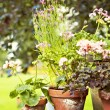 Rustic garden pots — Stock Photo