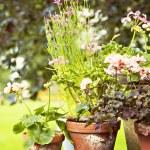 Rustic garden pots — Stock Photo