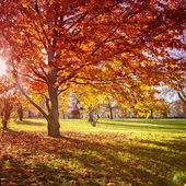 Colourful autumn park — Stock Photo