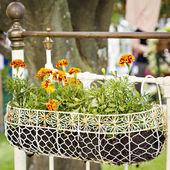 Hanging metal flower basket — Stock Photo