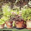 Garden pots — Stock Photo