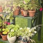 Garden life — Stock Photo #44275265