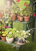 Garden life — Stock Photo