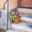 Potted plant front of house — Stock Photo #50727273