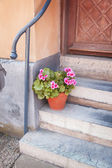 Potted plant front of house — Stock Photo