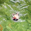 Swimming Duck - Stock Photo