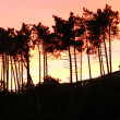 Tree Silhouettes in the sunset — Stock Photo