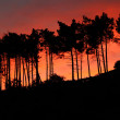 Tree Silhouettes in the sunset — Stock Photo #14659981