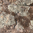 Weathered Rock — Stock Photo #16062555