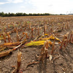 Dry field — Stock Photo #21442445