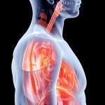Internal Organs - Lungs — Stock Photo