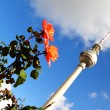 Flowers in front of the TV Tower in Berlin — Stock Photo