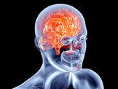 Internal Organs - Brain — Stock Photo