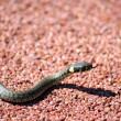 Little Snake - Stock Photo
