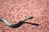 Little Snake — Stock Photo