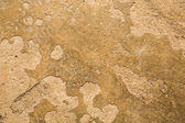 Painted concrete background — Stockfoto