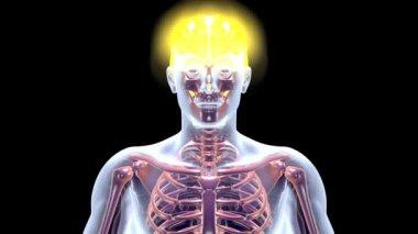 Glowing Brain — Stock Video
