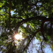 Stock Video: Trees in Sunlight