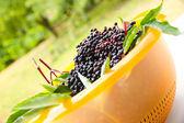 Elder Berries in a bowl — Stock Photo