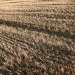 Harvested field background — Stock Photo