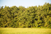 German Forest — Stock Photo