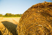 Hay bales on a field — Stock Photo