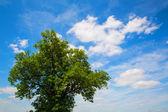 Tree against a blue Sky — Stock Photo